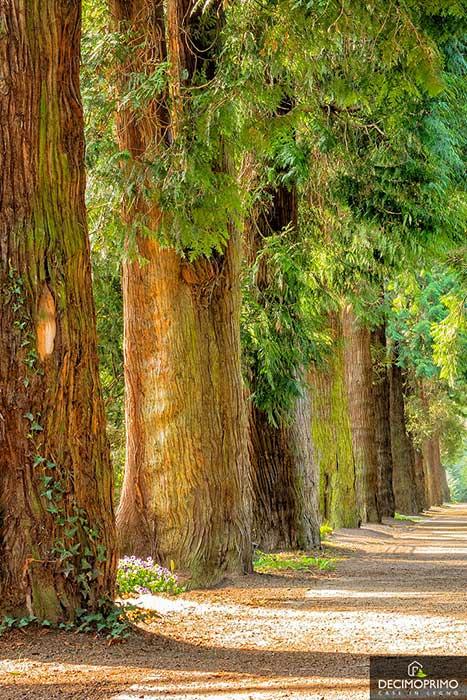 alberi_tagliati_case_in_legno